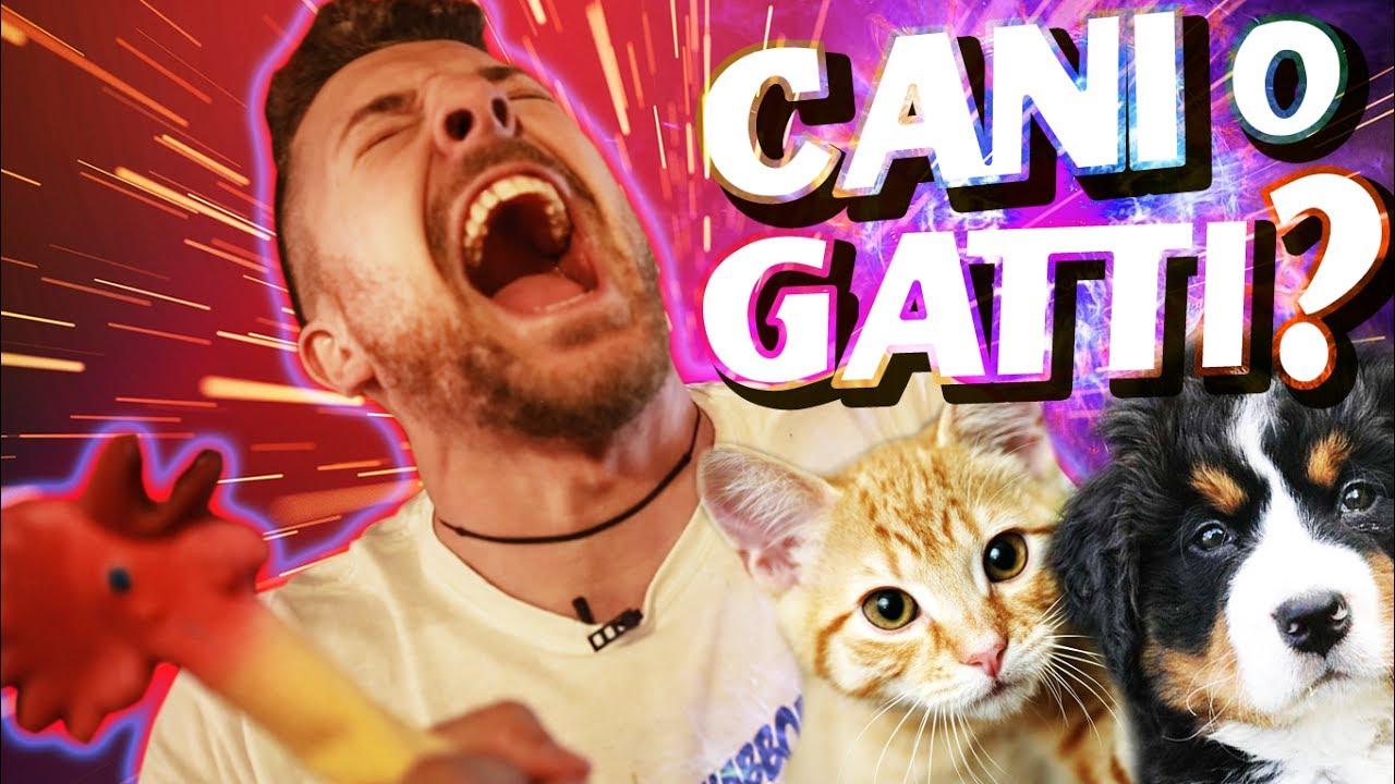 Cani o gatti top 5 animali themerluzz vlog youtube for Youtube cani e gatti