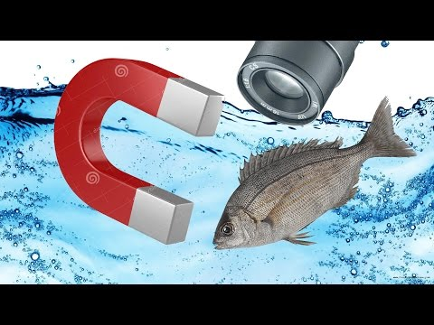 Fish Attractor ! Fast And Easy Process - How To Attract Fish?