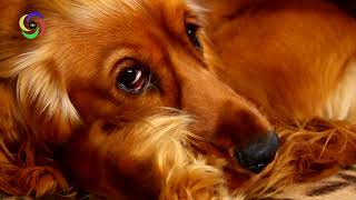 Sleep Music for Animals and Pets | Pet Music Therapy | Try this Music to Relax them !