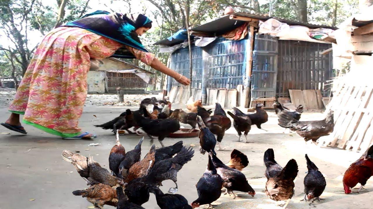 Home Business Ideas Starting A Business Chicken Farm