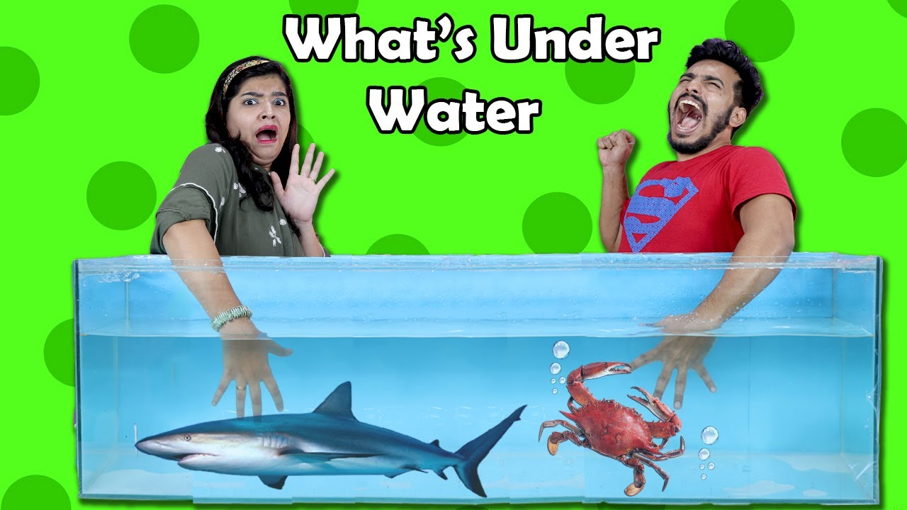 What's In Box Underwater Challenge I LIVE FISH I Funny Hungry Bird Video