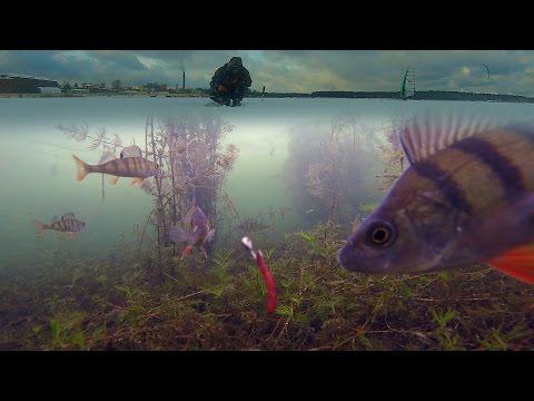 Зимняя рыбалка на окуня. Подводная камера