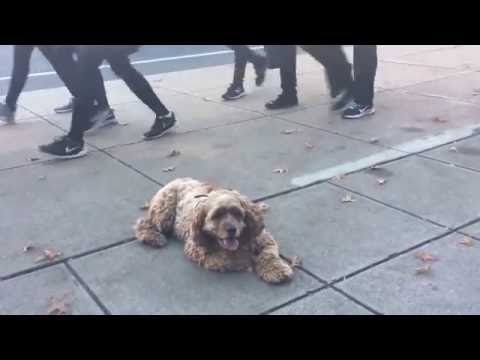 Connecticut Trainers: Summer the Food Aggressive Cocker Spaniel's Transformation
