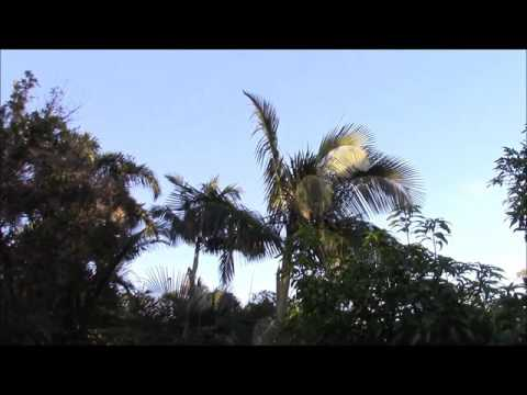 Hurricane Vs. Palms, Before and After