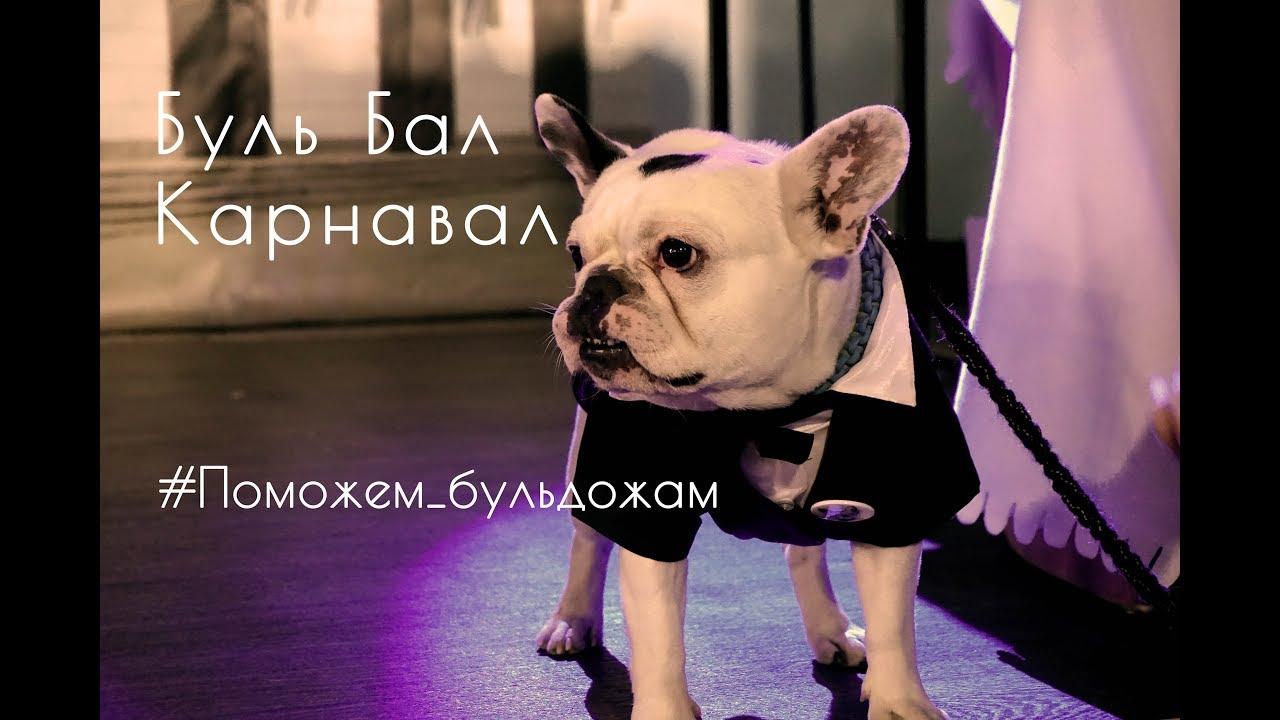 Плотные и коренастые бульдоги выглядят очень основательно, но из-за своего специфического строения черепа и скелета нуждаются в надлежащем уходе. Royal canin предоставляет возможность заказать специализированный корм для данной породы french bulldog adult онлайн, а также купить его в.