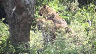 Amazing wildlife at Yala Nationalpark