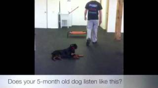 5-month Old Puppy!! Dog Training, Dc, Va, Nc