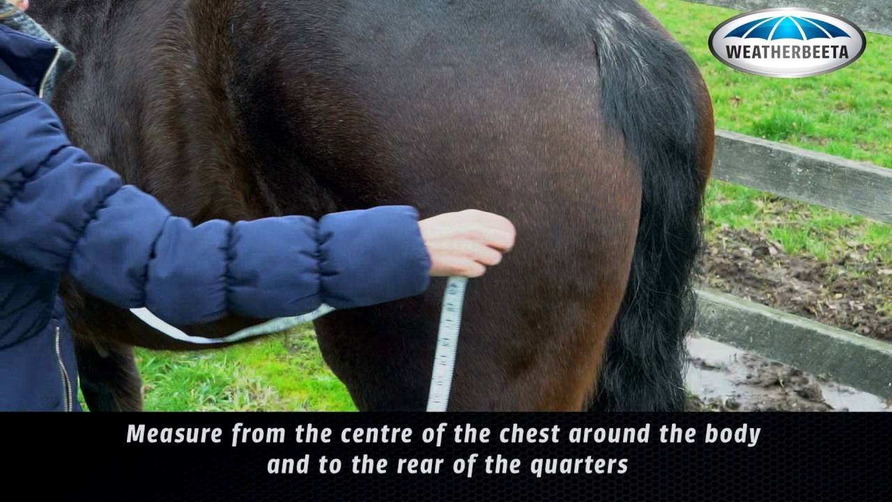 Rugging Your Horse How To Measure For