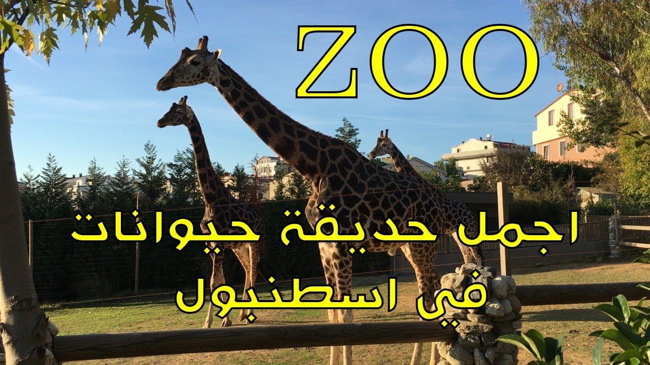 اجمل حديقة حيوانات في اسطنبول Zoo Faruk Yalcin Zoo And Botanic