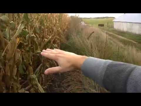 STEMbite: Genetically Modified Corn