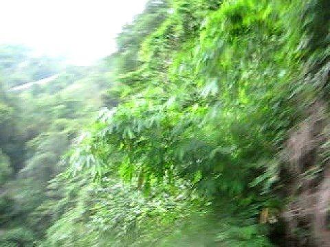 Phong  Canh Da Lat