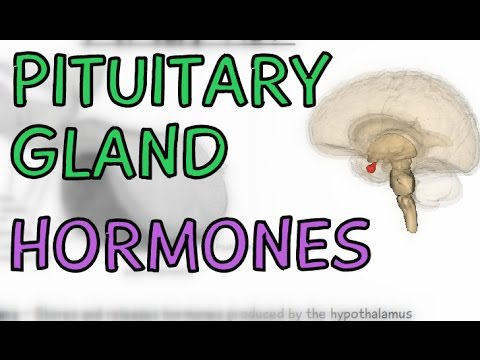 Pituitary Gland - Anterior and Posterior - Hormones