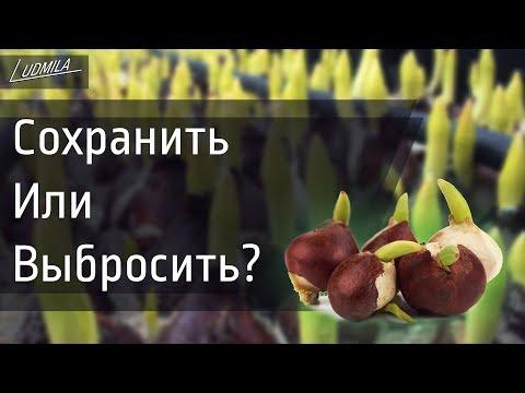 Как хранить тюльпаны в домашних условиях к 8 марта
