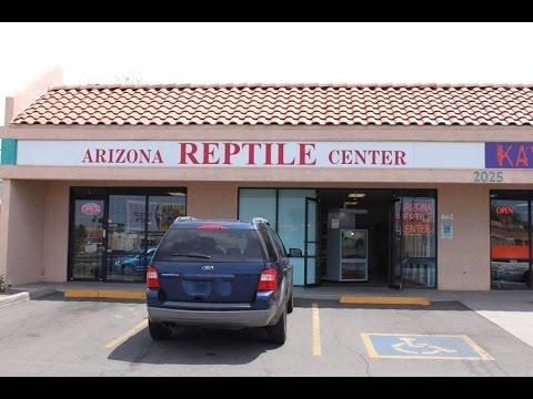 Arizona Reptile Centre Reptile Store Tour Youtube