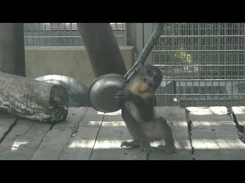 Mandrill baby [Kyoto Municipal Zoo] マンドリルの赤ちゃん[京都市動物園]