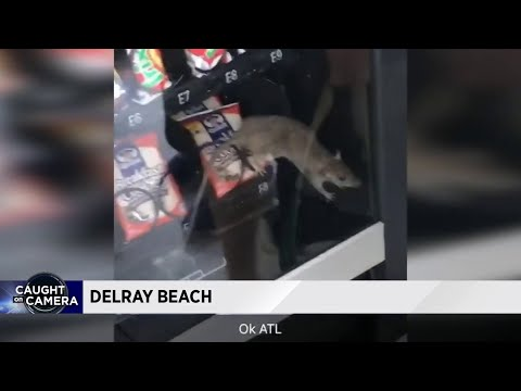 Wingnut - Rat Found In A Florida High School Vending Machine