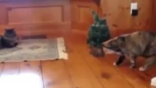 смешные видео про кошек за рулем обалдеть(приколы видео ролики видео приколы смотреть онлайн видео ролики приколы смотреть видео приколы смешные..., 2015-02-13T08:14:23.000Z)