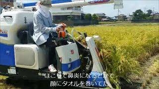 ようやく稲刈りも終了 合間に小さな田んぼで撮った稲刈りの様子と 乾燥...
