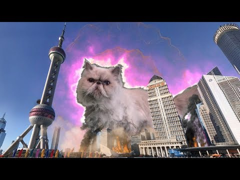TSC Episode 16 – CATZILLA ATTACKS SHANGHAI !! Part 1/2 – funny cat videos