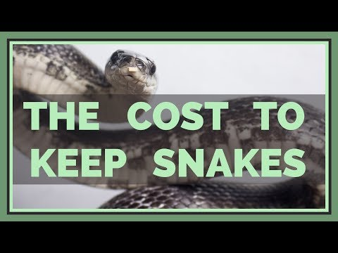 How Much Does It Cost To Keep A Pet Snake?