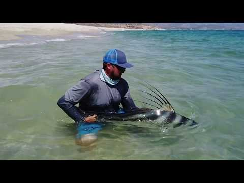 Fly Fishing For Roosterfish