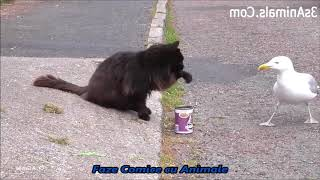 Faze Comice cu Animale /  Funny Moment With Animals - Laugh with tears