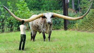 Животные-Гиганты, которые Побили Все Рекорды