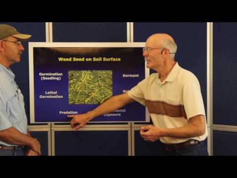 Fate of the Weed Seed in Conventional and NoTill Soils