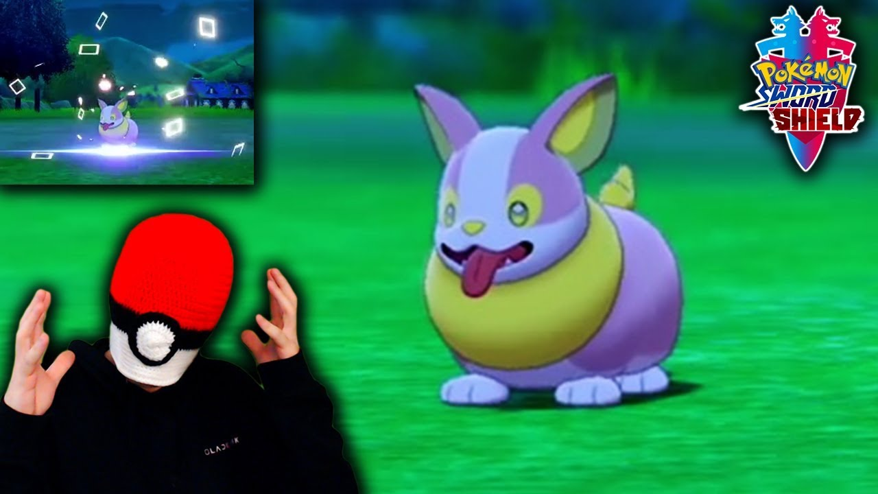 Shiny Yamper Live Reaction With Pokemon Camp Square Shiny Pokemon Youtube Yamper has an organ in its body that generates electricity, and this organ is activated when yamper yamper can't store the electricity it generates, so it's often seen running around with electric sparks. shiny yamper live reaction with pokemon camp square shiny pokemon