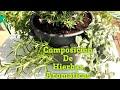 Como hacer Composición de hierbas aromáticas