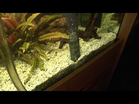 aquarium reinigen mit einer saugglocke youtube. Black Bedroom Furniture Sets. Home Design Ideas