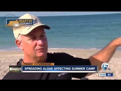 11pm Algae Crisis Coverage