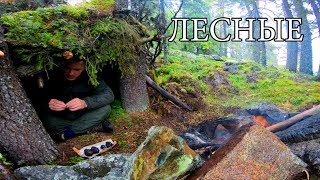 NO EQUIPMENT ONE IN THE TAIGA | FIND FOOD AND WATER | BUILD A COVER | REAL SURVIVAL