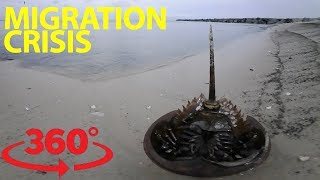 An epic migration and fight for survival on the Delaware Bay in VR thumbnail