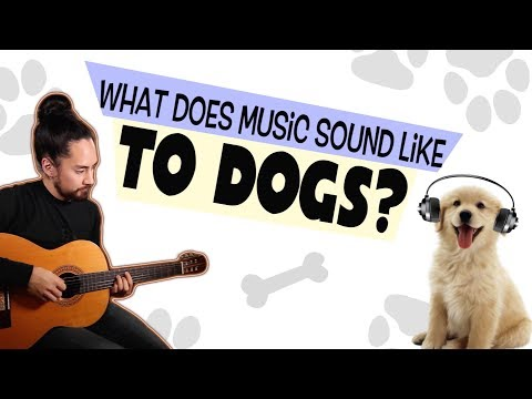 What Does Music Sound Like To Dogs?