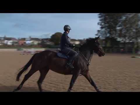 British Showjumping - Stepping up to Newcomers Part 5 Adding a related distance