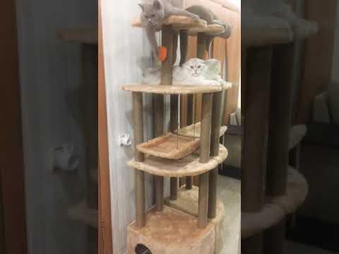 Игровой комплекс для кошек Банифаций