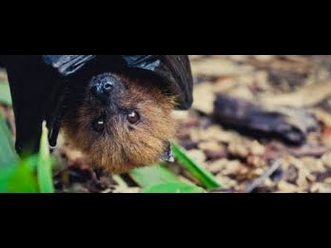 Will SARS Infested Bats Eradicate the Human Race