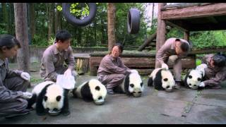"""Pandas: The Journey Home"" Official Trailer"