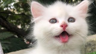 Persain Cat's Available for sale, all faces kittens & Adults, hyderbad fusion,call: 9247877251
