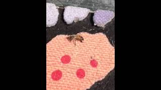 Bee Pollinates Fake Flowers