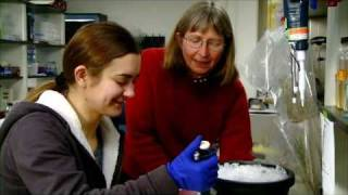 Colorado State University Biologist Rewires Plants to Detect Pollutants, Explosives