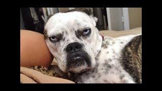 1.「おもしろ犬」中指を立てられた犬の反応・ちょう面白い・めっちゃキ...