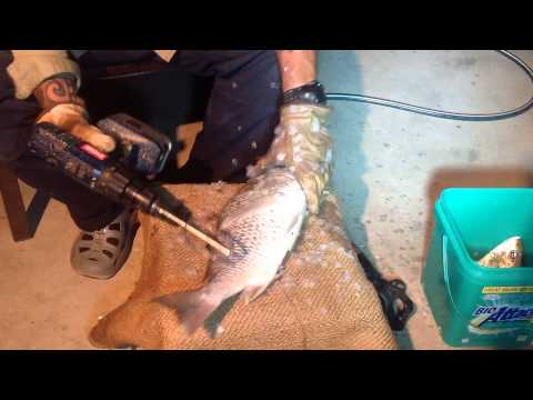 How to use a fish scaler no bones about it doovi for Skinzit fish cleaner