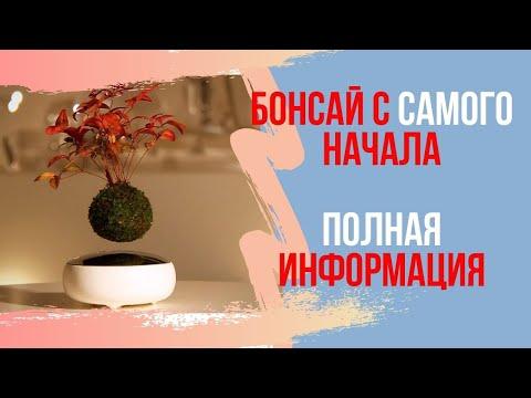 Как вырастить банзай дерево из семян в домашних условиях