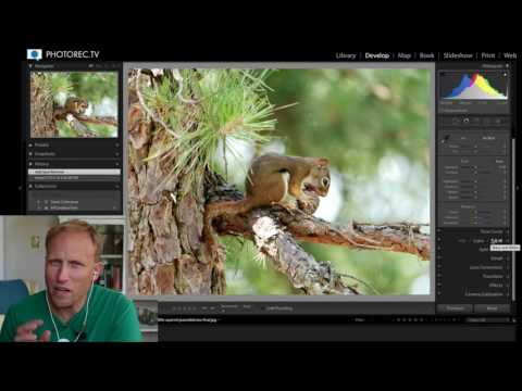 Tips on How to Take Better and Edit your Wildlife Pictures
