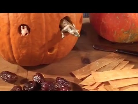 Martha's Favorite Ideas for a Halloween Party - Martha Stewart