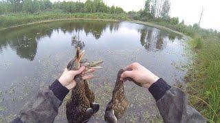 Открытие осенней охоты на утку