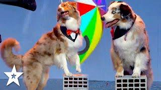 Dogs Singing In The Rain on Bulgaria's Got Talent 2021 | Got Talent Global