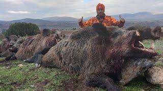 Afyon ve Denizli domuz avları!Great Wild boar hunt!